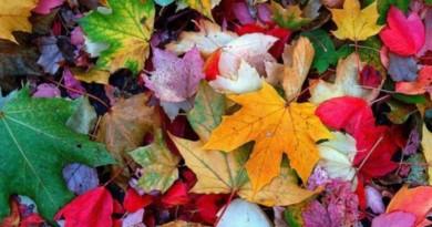 19_cores de outono