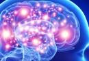 O cérebro funciona em rede utilizando partes distantes, mas interativas, para processar informação