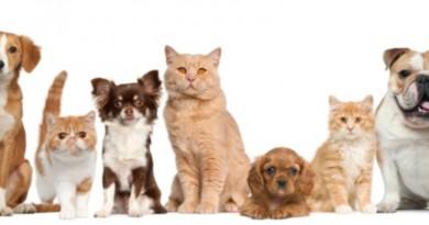 28_cães e gatos