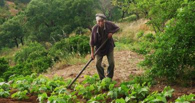 trabalhando na horta1
