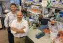 Novo tipo de células do sangue funciona como indicador de doenças autoimunes