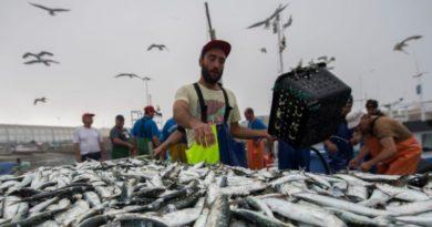 6 - sardinha