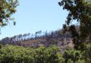 Campanha solidária vai reflorestar 25 hectares de área ardida em Monchique