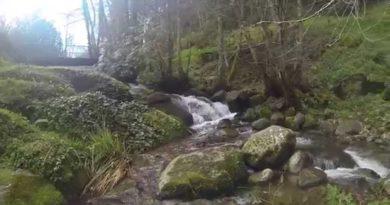 Caminhada Pedagógica pretende sensibilizar para importância da floresta