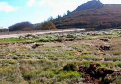 Os grandes desafios de Monchique que vão criar uma nova sequência ecológica e remunerar os proprietários