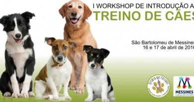 12_workshop_cães