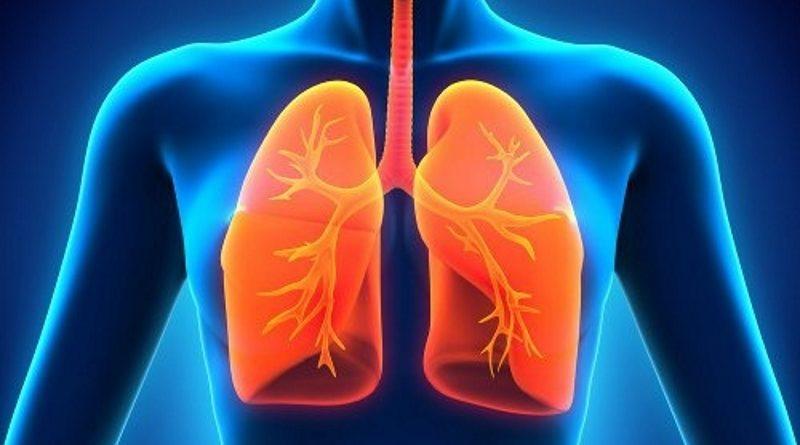 18 - pulmoes-500x380